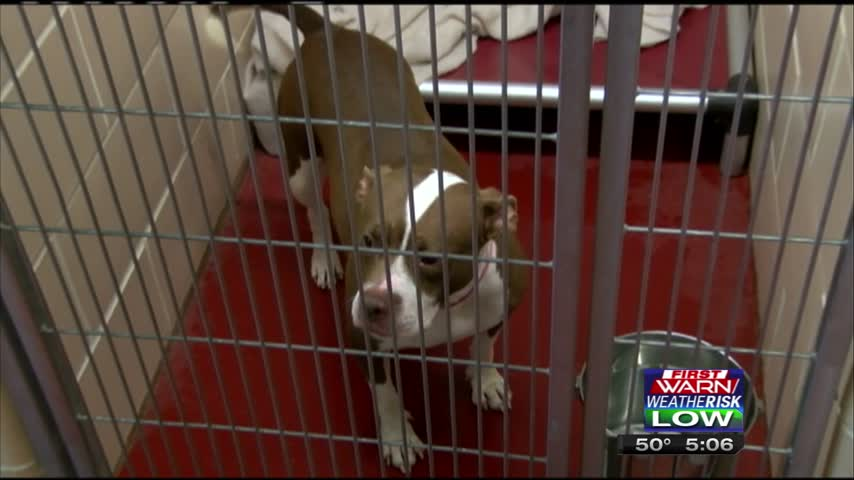 Winnebago County Adopt-a-Dog_24554698-159532