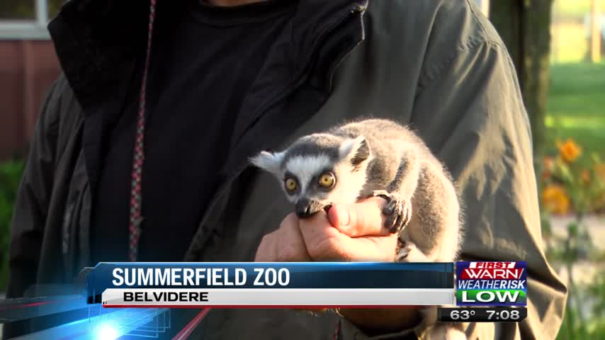 Summer Field Zoo_37899115