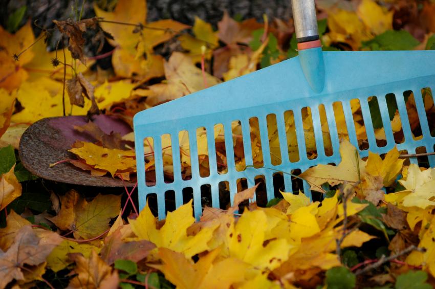 leaves_1508945666665.jpg