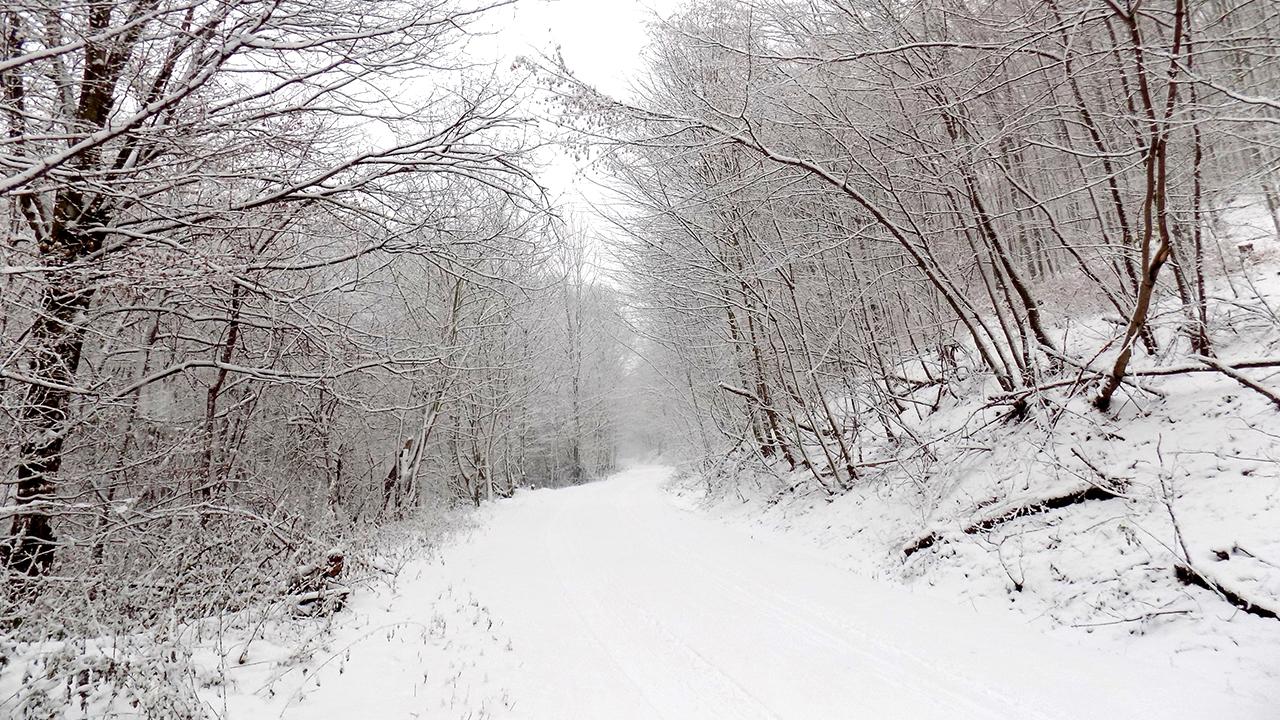 snowy-roads-winter-bad-weather_1515605203732_330228_ver1_20180111055509-159532