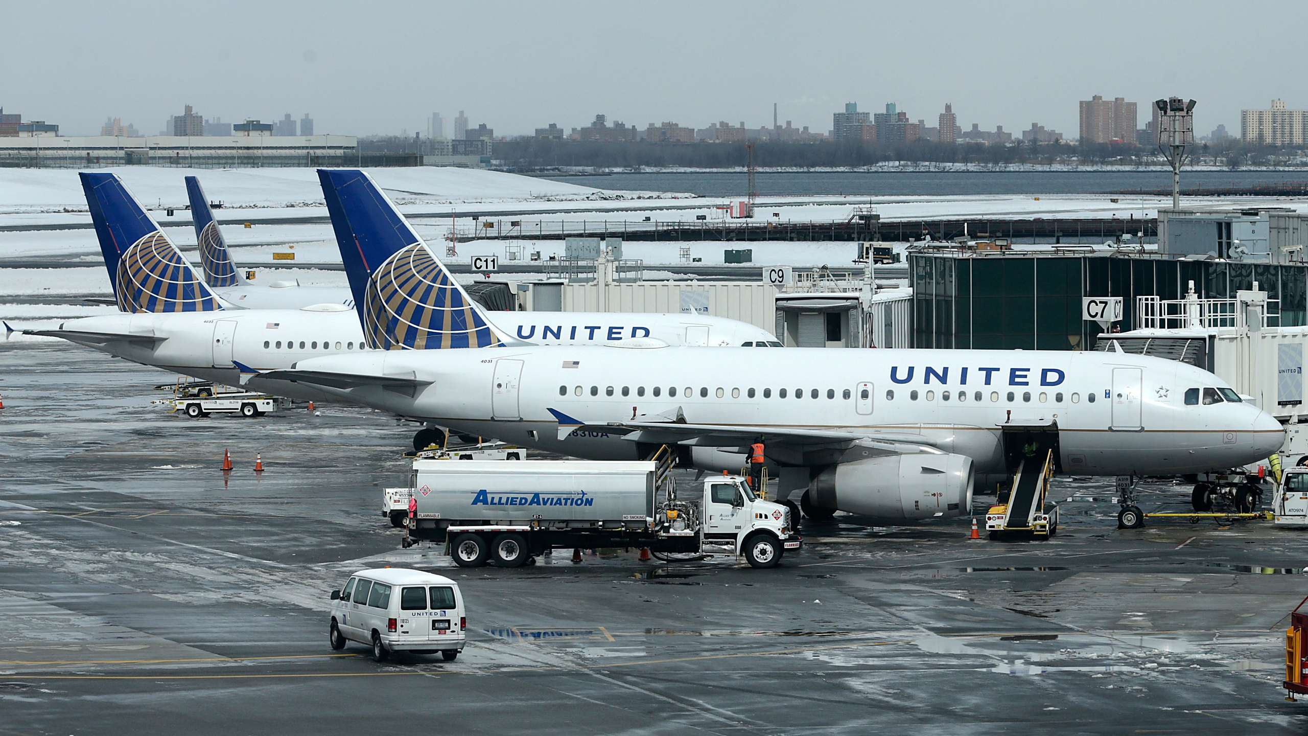 United_Airlines_Dead_Dog_50414-159532.jpg70740344