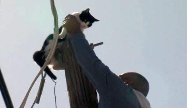 cat stuck on pole_1522196625030.JPG.jpg