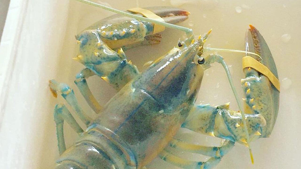 lobster_1534252971165.jpg
