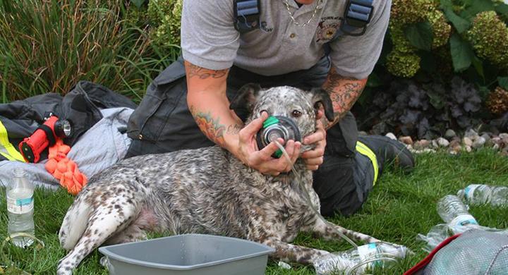 dogs_1537388524607.jpg
