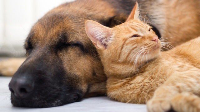 Cat dog sleeping_2806598004615654-159532
