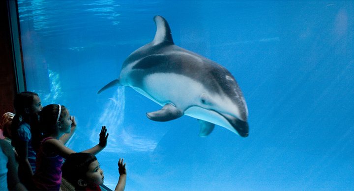 Copy-of-Kids_dolphin_5297_1536161038435_54290145_ver1.0_1280_720.png_1546978214952.jpg