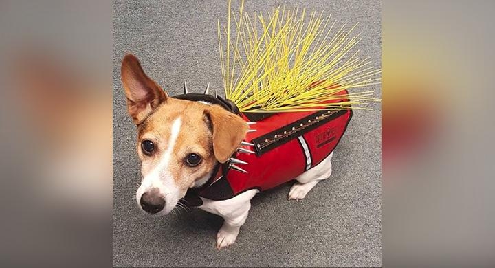 dog coyote_1546635116100.JPG.jpg