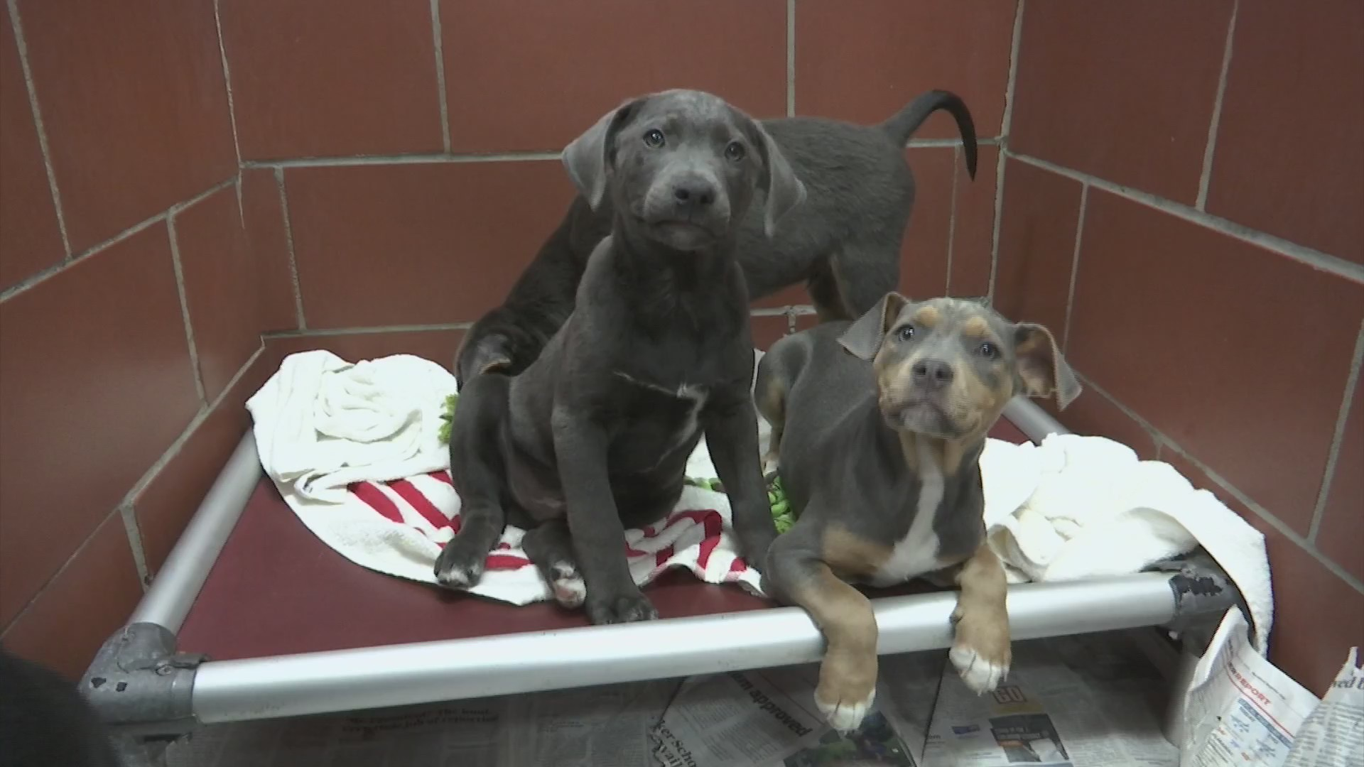 Animal shelters seeing influx of puppies as 'puppy season' approaches