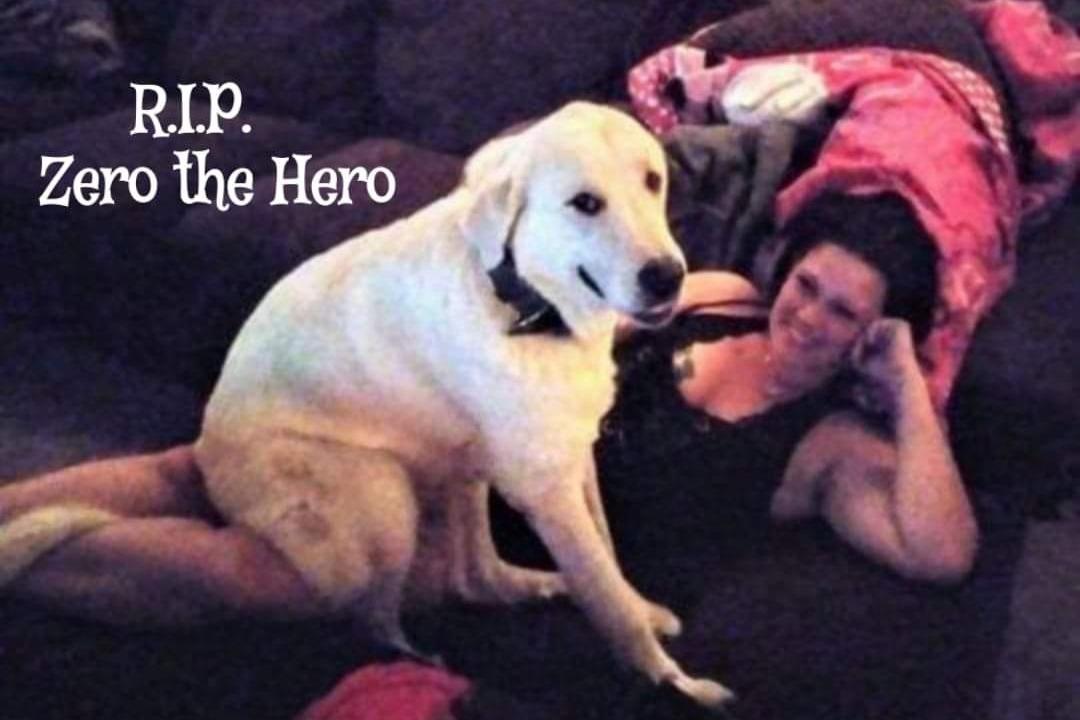 Dog Hero_1553541265543.jpeg.jpg
