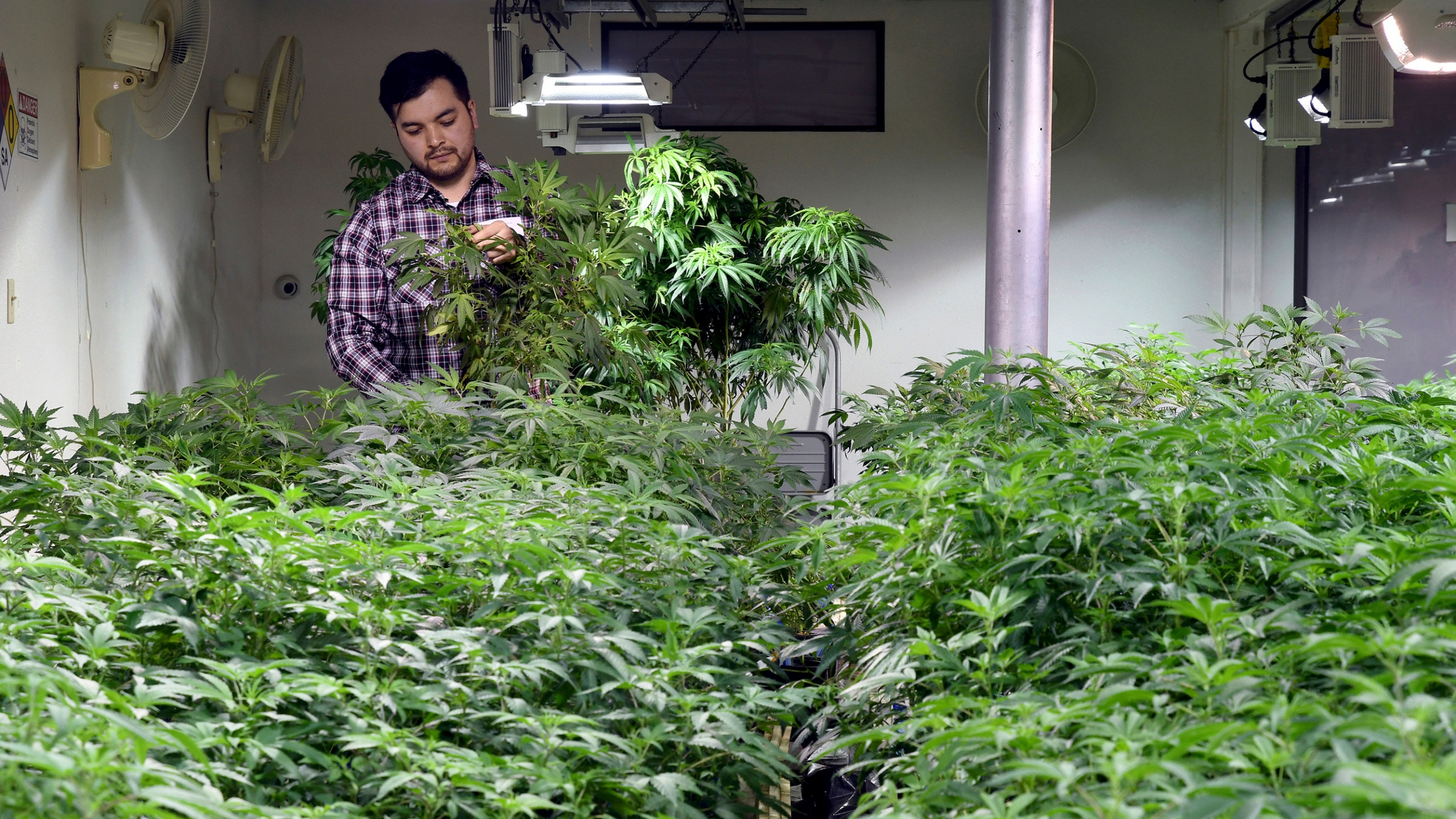 Legal_Marijuana_Citizenship_Denials_59360-159532.jpg98224624