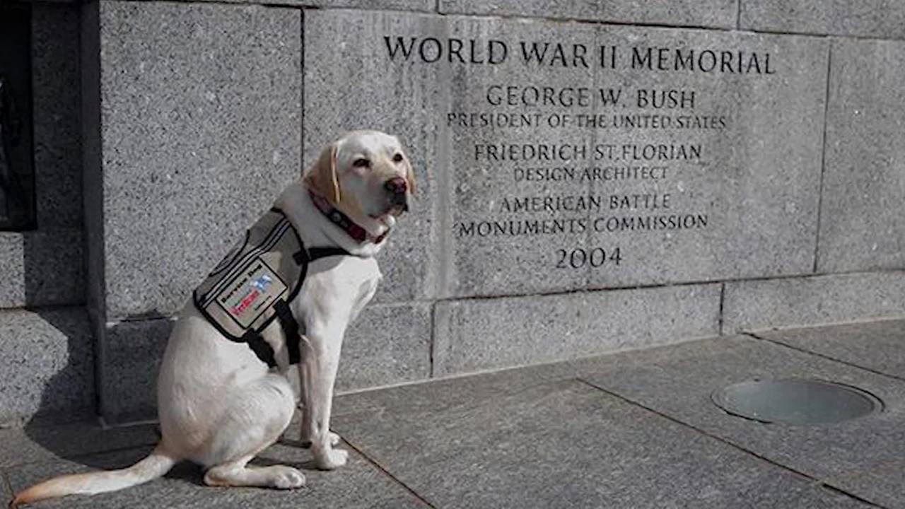 Sully_honors_George_HW_Bush_7_89375759_ver1.0_1280_720_1558976403816.jpg