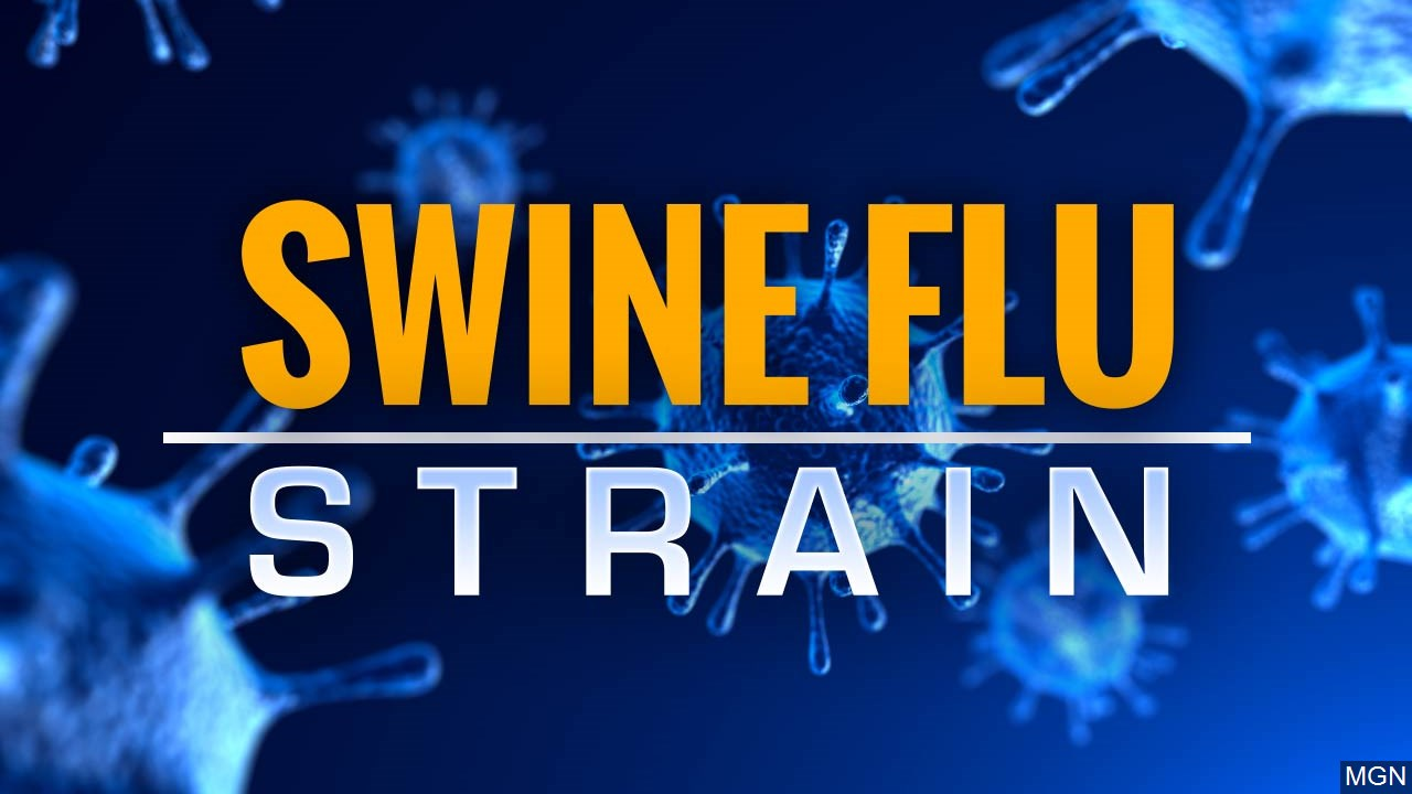 New Strain Of Swine Flu Virus Spreading To Humans In China Scientists Say Mystateline Com
